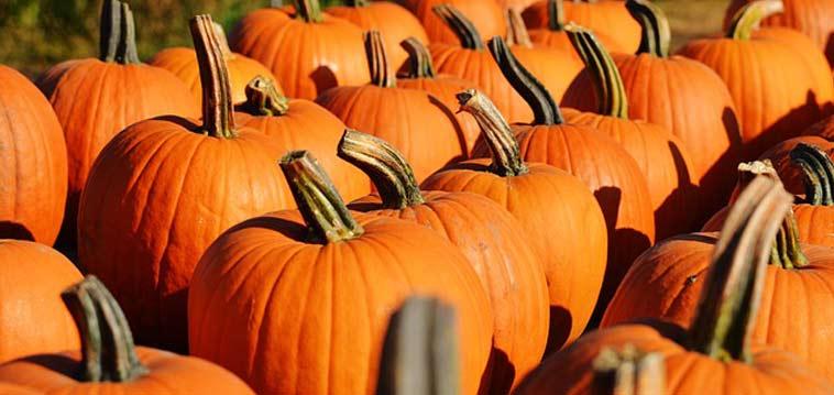 Halloween-Pompons